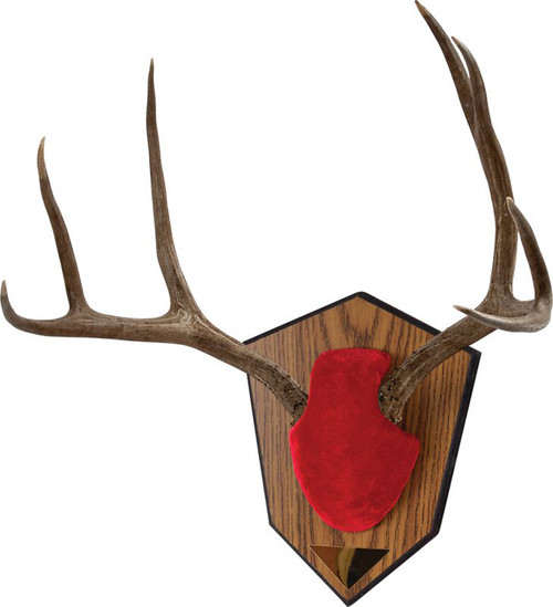 Allen Antler & Horn Mouting Kits RED #561