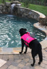 Lake Life K9 Float Vest - Nylon with Buoyant Foam - Dog Life Jacket/Preserver - Paw Prints and Shark Fin - Adjustable