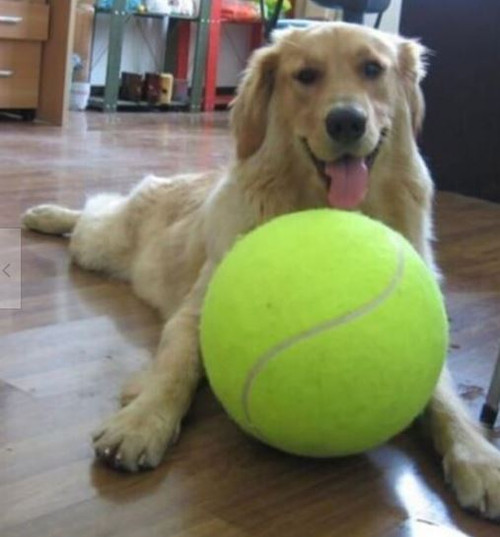 Dog with giant yellow tennis ball