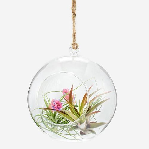 Department 56 Medium Air fern Blown Glass Hanging Terrarium 4039926 Retired