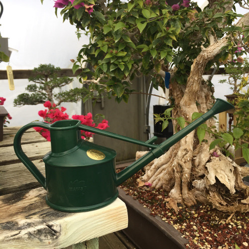 Watering Cans Bonsai Watering Tools Bonsai Outlet