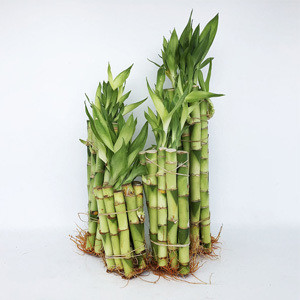 Stalks Only (Packages)