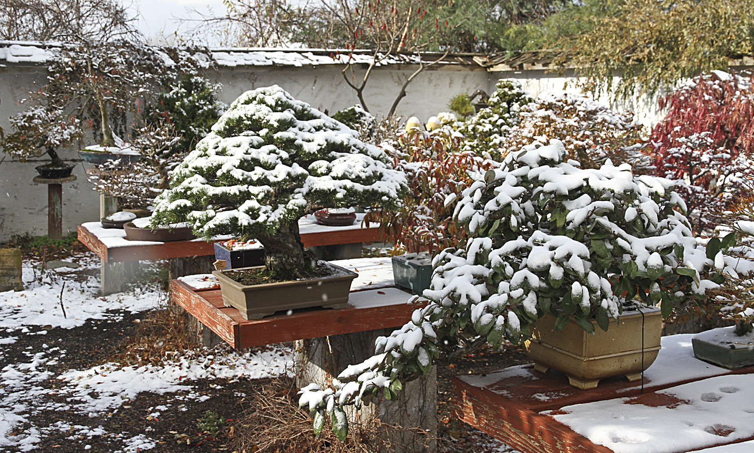 Hot Tips For Keeping Your Bonsai Safe During The Cold Winter Bonsai Outlet