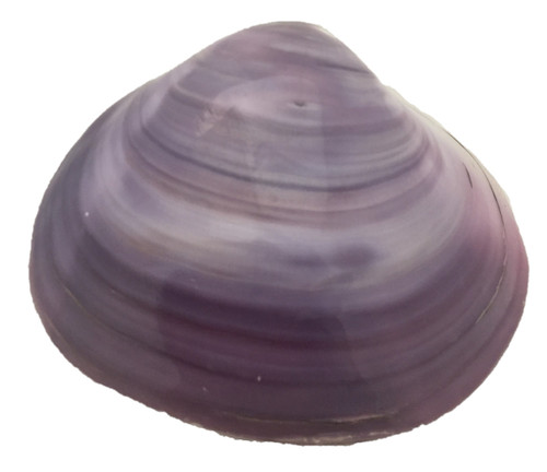 Tok Shells