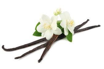 Vanilla Bean Noel Fragrance Oil