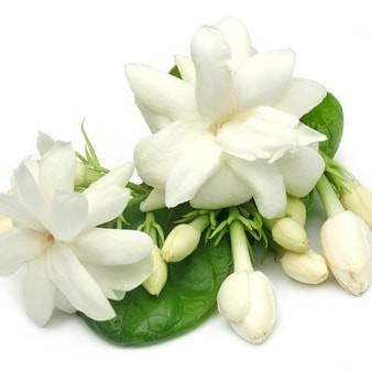 gardenia rose