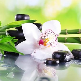 bamboo teak