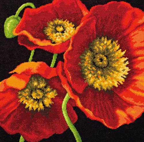 Dimensions - Red Poppy Trio