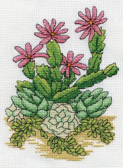 Design Works - Cactus (Eriosyce)