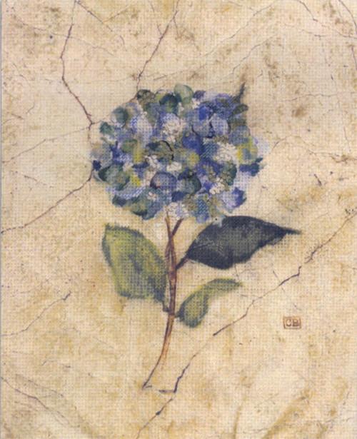 Candamar - Hydrangea on Cracked Linen