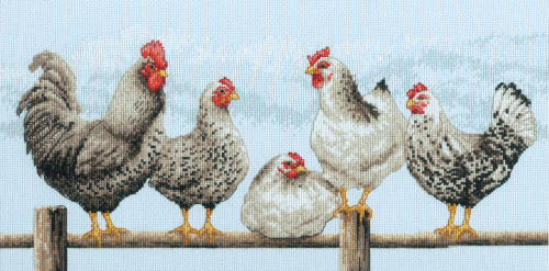 Dimensions - Black & White Hens