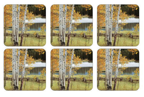 Set of 6 Birch Beauty Coasters by Pimpernel - Special Order