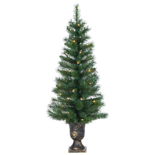 Potted 4 ft. Idaho Pine in Plastic Pot by Sterling Tree