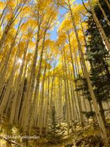 The Enchanted Aspen Trail in Arizona