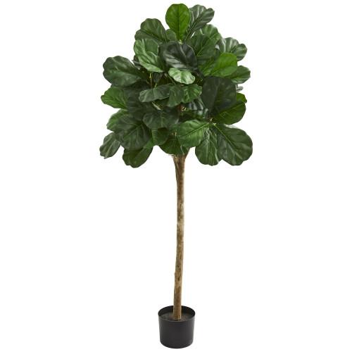 Fiddle Fig Leaf Tree, 5 ft