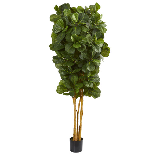 Fiddle Fig Tree Specifications Height: 7 Ft. Width: 30 In. Depth: 30 In. Pot Size: H: 5.5 In. W: 6.5 In. D: 6.5 In.