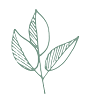 n-a-plant-smaller.png