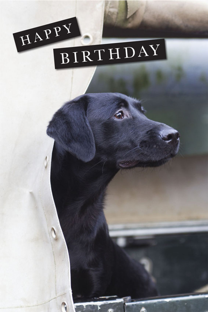 Happy Birthday Card Labrador In Landrover