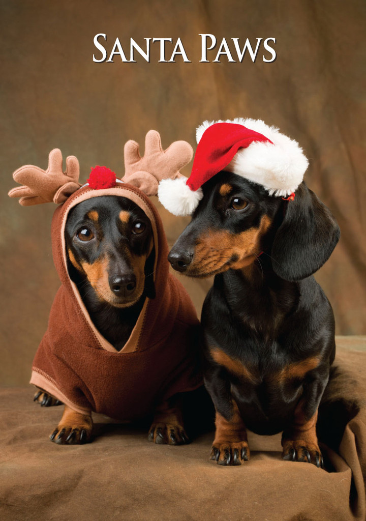 Miniature Dachshund Pair Santa Paws Christmas Card