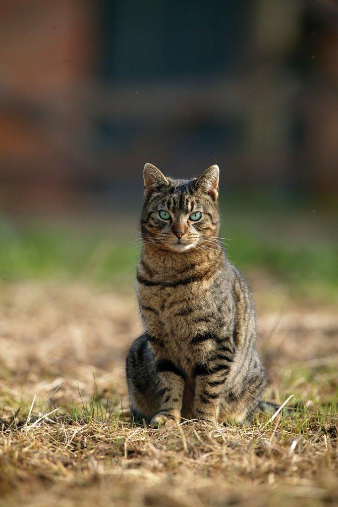 Percy the Farm Cat Card