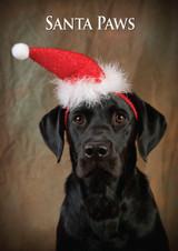 Labrador Santa Paws Christmas Card