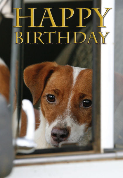 Happy Birthday Card Jack Russell CSP from Fraziers Wine