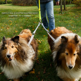 Walking two dogs at once has never been easier - and 100% tangle free