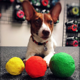 WUNDERBALL is available in 3 sizes so you can get the perfect size fetch toy for any size dog.