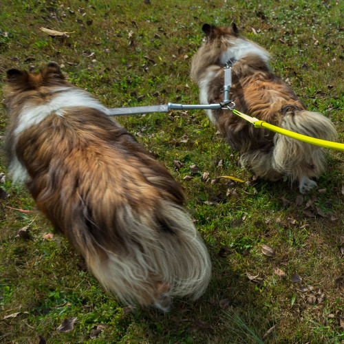 2 Dogs on 1 Leash - CRAZYcoupl'r