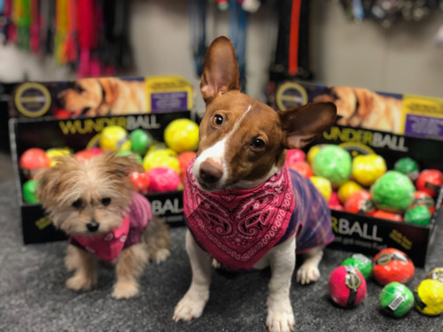 What are you waiting for?  Order me the new WUNDERBALL today and you will make me a very happy pup.