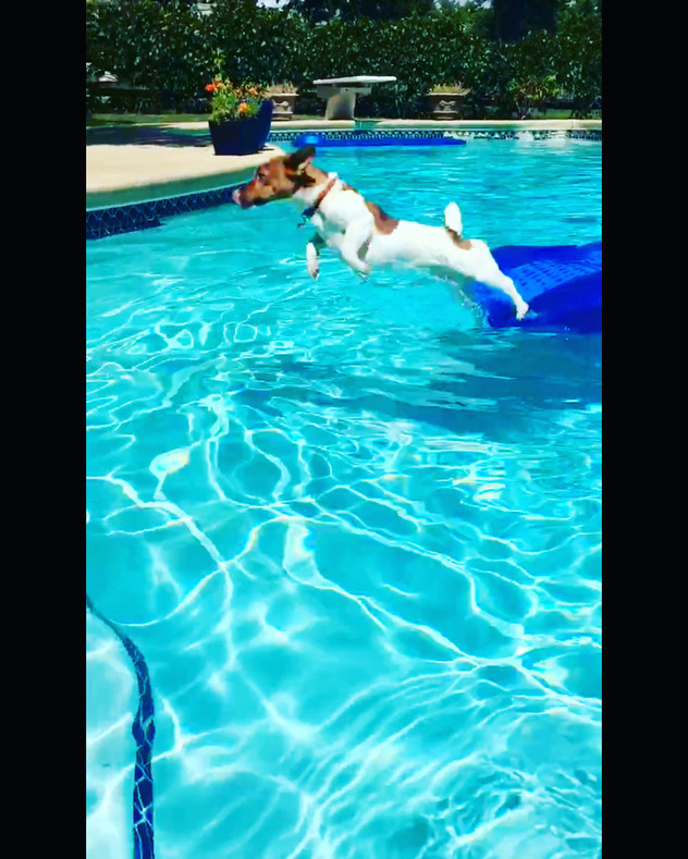 Dog Safety Swimming Tip
