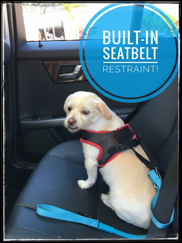 SEAT BELT RESTRAINT FOR DOGS - All WACKYwalk'r Products Include One!