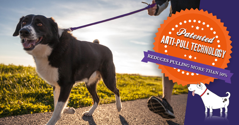 Training you new dog (or puppy) to stop pulling on the leash can be easy and painless