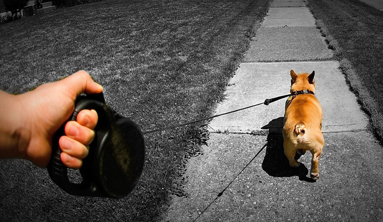 Dangers of using a Retractable Dog Leash - Know the Risks