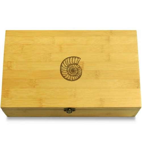 Seashell Spiral Fossil Ammonite Box Lid