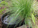 Do you have green water or string algae in your pond?