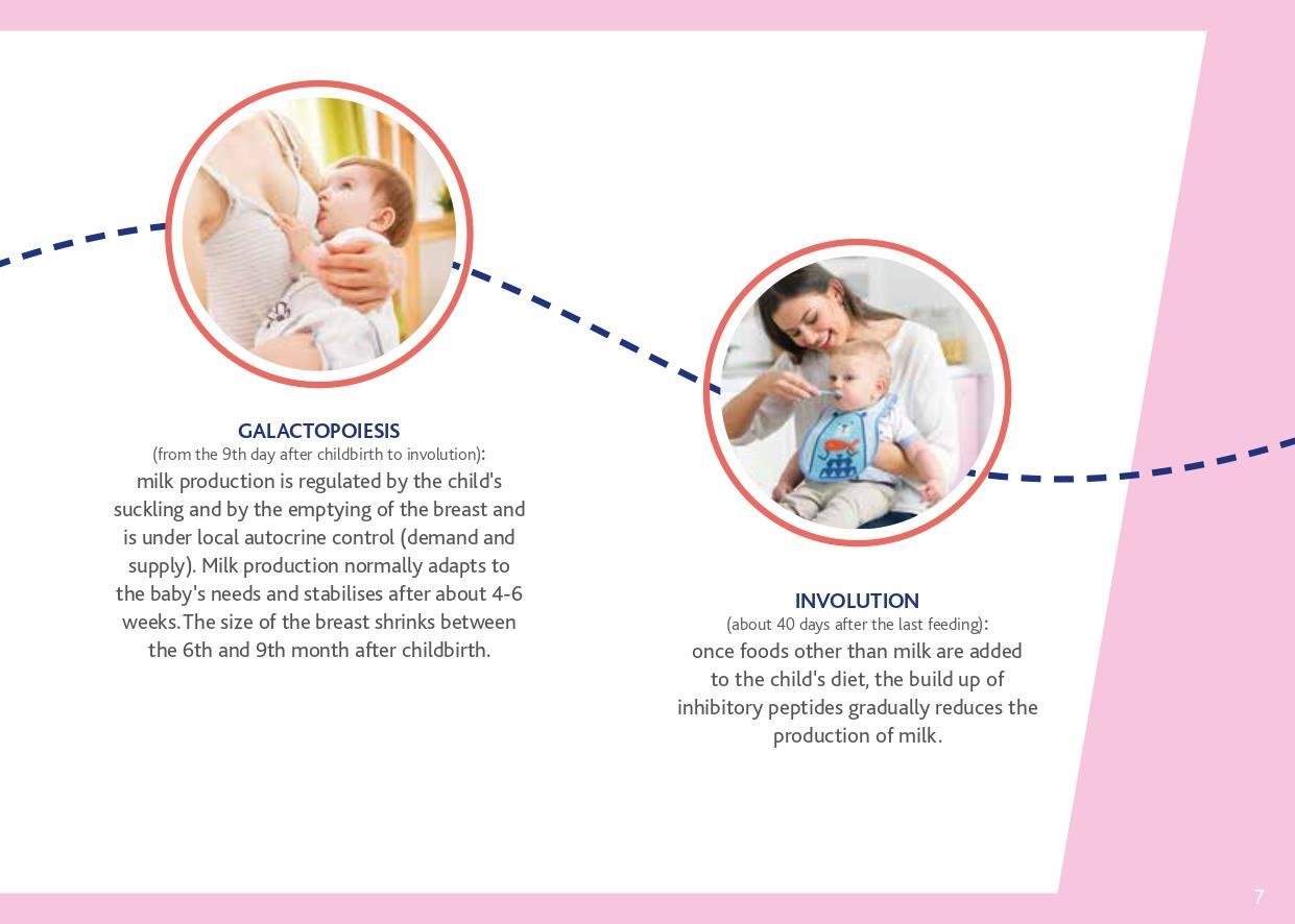 breastfeeding-guide2019-osservatorio-chicco-bassa-page-0007.jpg