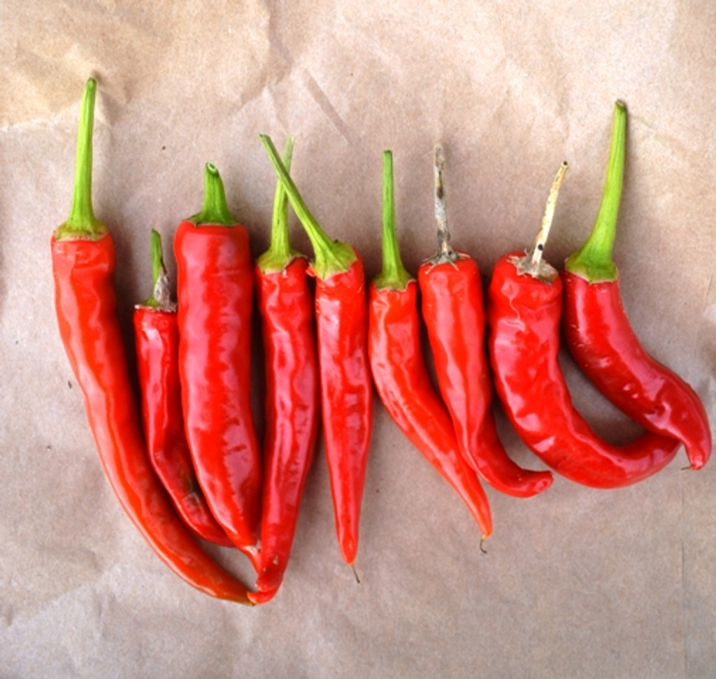 Organic Pepper Ring O Fire Solero - Gardener's Packet (30 Seeds)