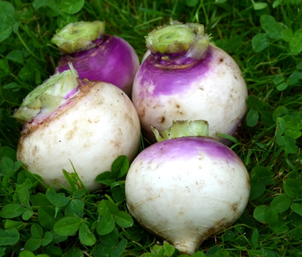 Organic Turnip White Globe - Gardener's Packet (500 Seeds)
