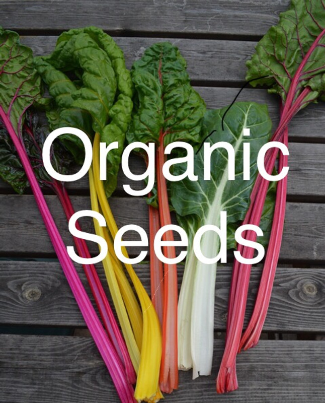 Planning your plot and getting organic