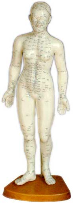 female body acupuncture point model 19 inches tall