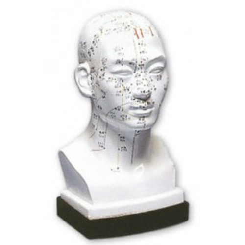 acupuncture point head model