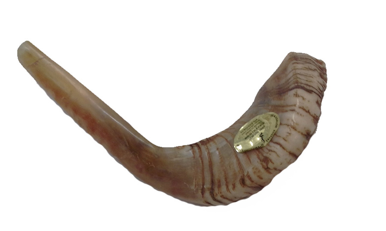 45 cm / 18 inch Half-Polished Tan Shofar