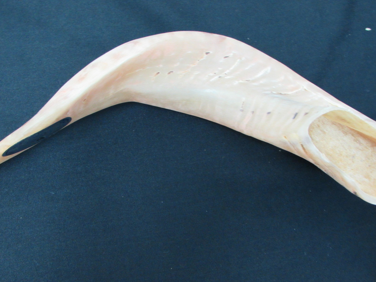 39 cm Light Brown Ram's Horn Shofar