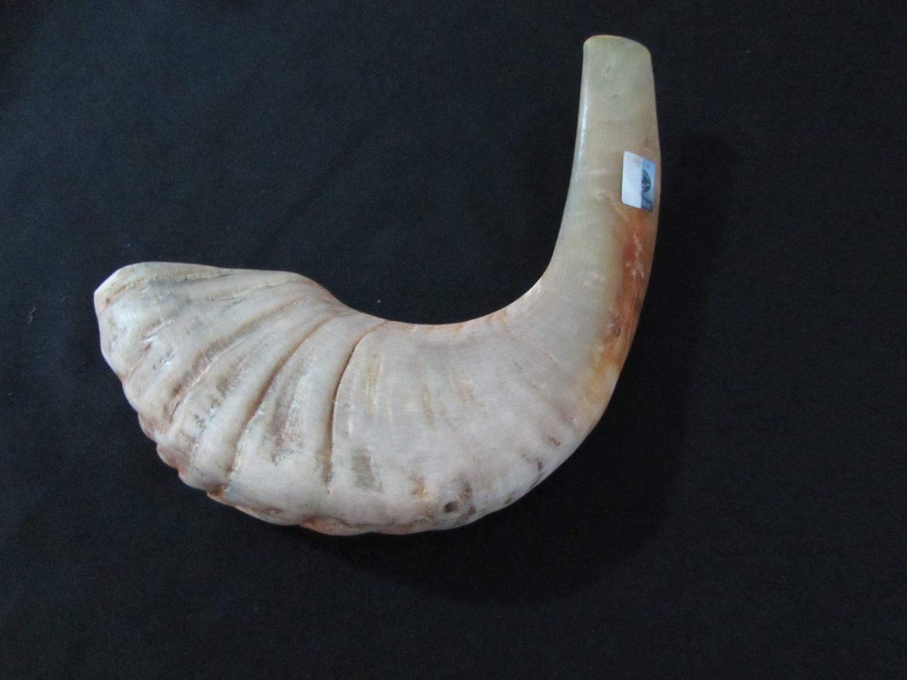 33 cm Tan Ram's Horn Shofar