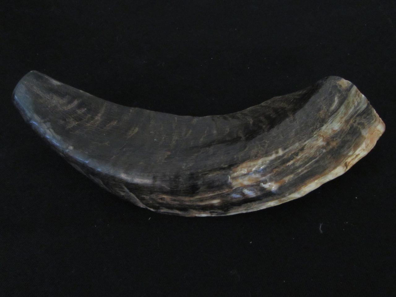 18 cm Tan Ram's Horn Shofar