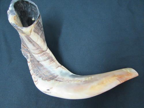 43 cm Dark Ram's Horn Shofar