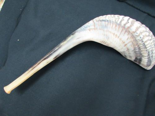53 cm Dark Ram's Horn Shofar