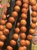 Bodhi Seed Mala, 12mm