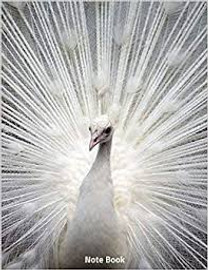 White Peacock Sketchbook